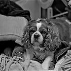 Washboard spaniel by jmsandjono