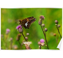 Thistle & Flutter Poster