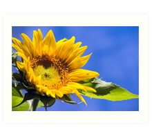 Sky Sunflower Art Print