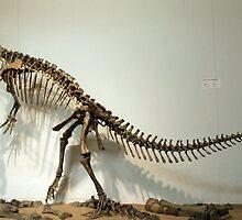 Strong Plateosaurus by skeletonsrus