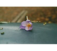 Lovely Lonely Purple Flower Photographic Print