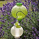 Lanterns & Lavender by dilouise