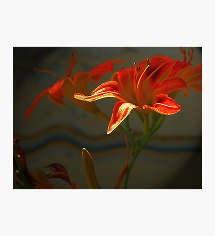 My Daylilies 2 Photographic Print