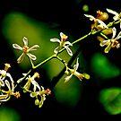 FLOWERS  BRANCH by Khaled EL Tangeer