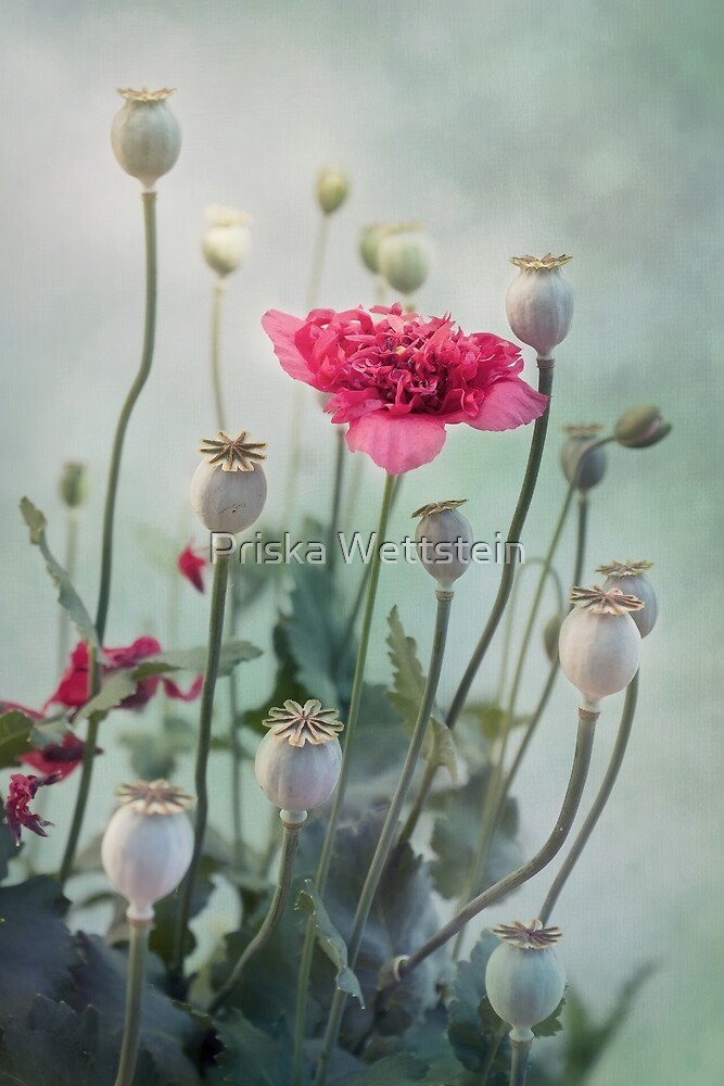 Pods, Buds and Flowers by Priska Wettstein