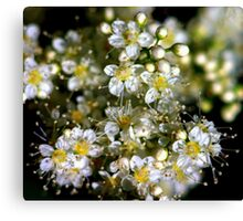 The Delicate World of Tiny............. Canvas Print