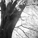 Tree#2 by © Joe  Beasley IPA