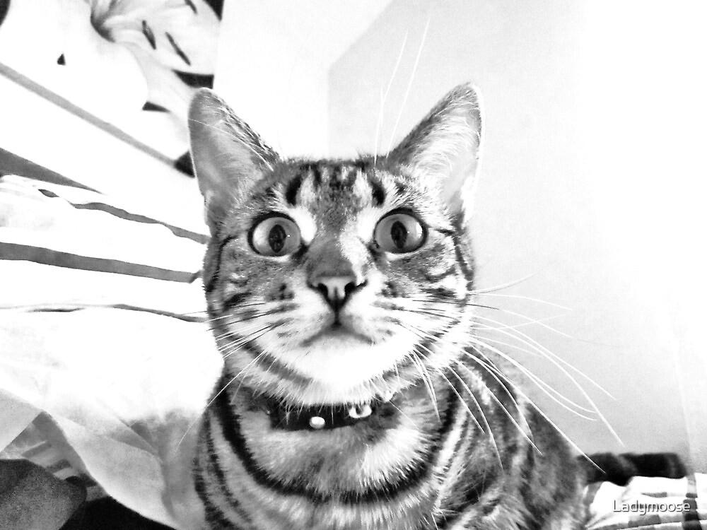 Wot Catnipz? by Ladymoose