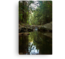 Another Pool in the Forest Canvas Print
