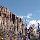 Zions by angelmarie