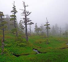 In The Clouds by Bob Hortman