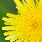 Macro in Yellow by EmmaLeigh
