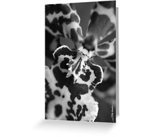 Maui Orchid Greeting Card