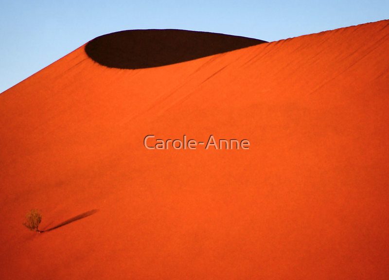 Sculptured dune, Namib Desert soon after sunrise  by Carole-Anne