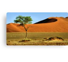 Namib Desert Dunes, Tree & Dry Tsauchab River Valley, Namibia  Canvas Print