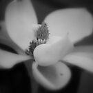 Steel Magnolia by Sunshinesmile83