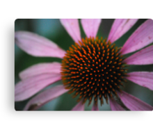 Spike Me Up With Echinacea Canvas Print