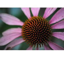 Spike Me Up With Echinacea Photographic Print