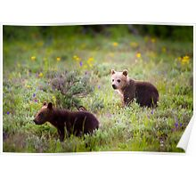 Grizzly Bear #399's Cubs Poster