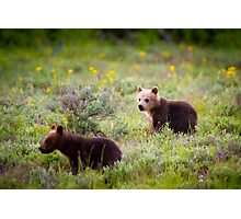Grizzly Bear #399's Cubs Photographic Print