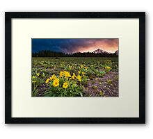 Balsamroot Wildflowers and Teton Mountains Sunset Framed Print