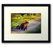 Grizzly Bear #399 and Her Three Cubs Framed Print