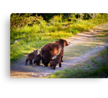 Grizzly Bear #399 and Her Three Cubs Canvas Print
