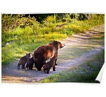 Grizzly Bear #399 and Her Three Cubs Poster