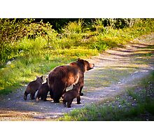 Grizzly Bear #399 and Her Three Cubs Photographic Print