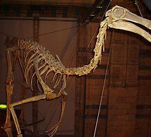 Wonderful Gallimimus by skeletonsrus