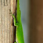 Hanging Out with Gieco by Bill Gamblin