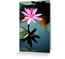 Pink - waterlilly Greeting Card