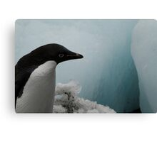 Adélie Penguin Canvas Print