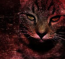 Evil Cat by Stephen Jay