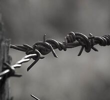 Barbed Wire by Jason Scott