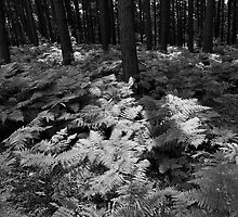 Trees and ferns by David Isaacson