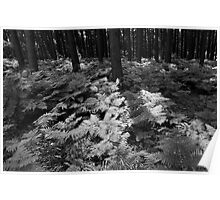 Trees and ferns Poster