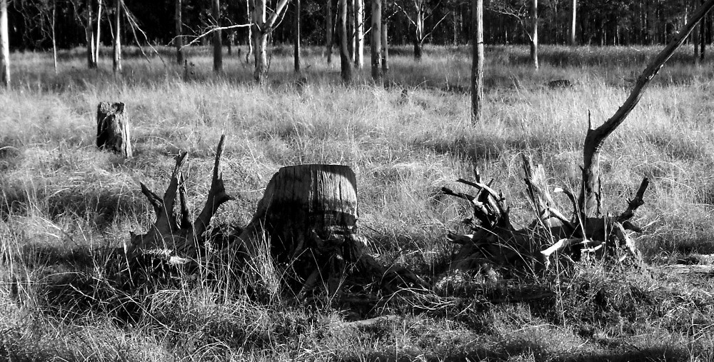 stump and roots by Mark Batten-O'Donohoe