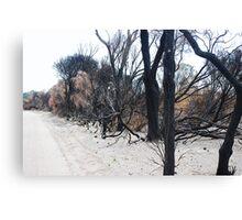 Aftermath of a Bush Fire Canvas Print