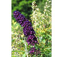 Purple and Orange Flowers, North Carolina Photographic Print