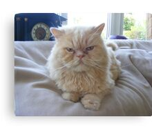 Grumpy Kitty Canvas Print
