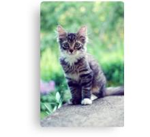 Kitten #5 Canvas Print