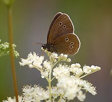 Ringlet by Declan Carr
