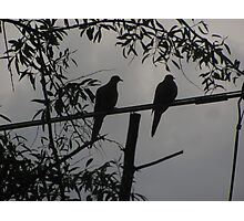 """Two Turtle Doves Hangin' Together"" Photographic Print"