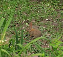 """""""Baby Rabbit Lookin' For Mama"""" by dfrahm"""