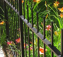 """Lilies Peekin' Through Iron Fence"" by dfrahm"