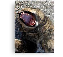 Cat Yawning Metal Print