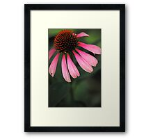 Spike Me Up With Echinacea 2 Framed Print