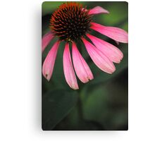Spike Me Up With Echinacea 2 Canvas Print