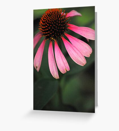 Spike Me Up With Echinacea 2 Greeting Card
